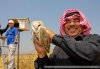 [REPOST - EVENT] Birds as Peacemakers in Conflict Areas  Barn Owls in Jordan - Israeli Peace Process